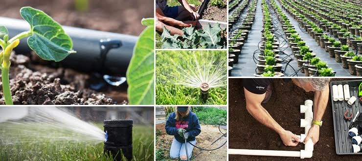 Save Your Time and the Planet with Reece Irrigation and Pools